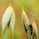 Lady Bug Larva