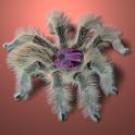 GrammostolaRosea LiveWallpaper icon