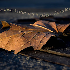 leaf love by Denise Johnson - Typography Captioned Photos (  )
