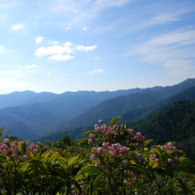 A Smoky Mountain Spring by Dustin VanHoose - Landscapes Mountains & Hills ( hill, mountain, landscape, spring, flower )