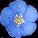 Colorado Rocky Mtn Wildflowers Icon