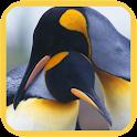 Penguins 3D. Live Wallpaper icon