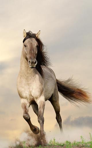 Horses Live Wallpaper 20.0 screenshots 1