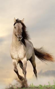 Horses Live Wallpaper
