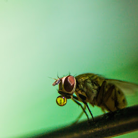 Bubble Pop by Krizzel Almazora - Animals Insects & Spiders