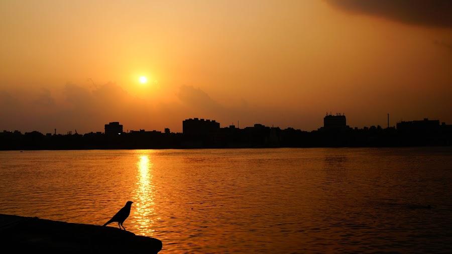 Solitude by Caesar Jees - Landscapes Sunsets & Sunrises ( bird, waterscape, silhouette, sunset, landscape, sun, river )