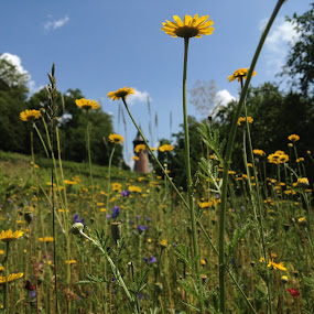 Mainau by Andy Bond - Flowers Flower Gardens ( europe, mainau, germany, flowers, flower )
