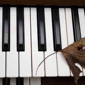 piano (1 of 1).jpg