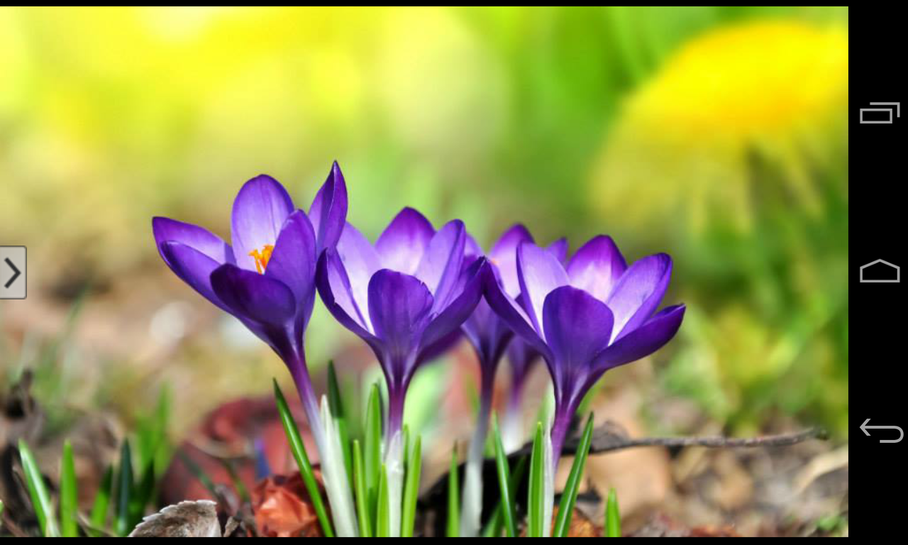Beautiful flowers wallpapers android apps on google play beautiful flowers wallpapers screenshot dhlflorist Images