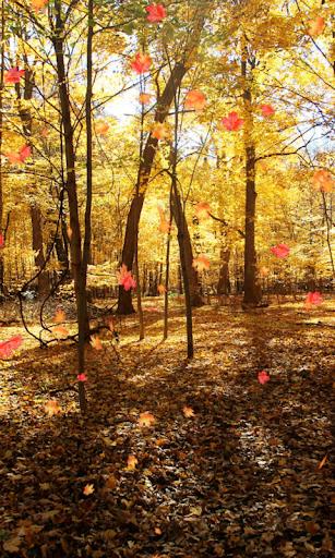 Autumn Wallpaper screenshots 2