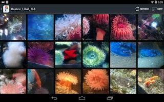 Screenshot of PicsPro for Picasa, Google+