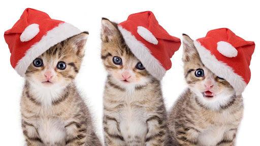 【免費工具App】可愛的小貓壁紙-APP點子