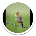 My Photo Wall Singing Bird LWP icon