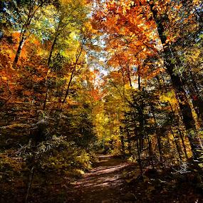 Deep Woods.jpg