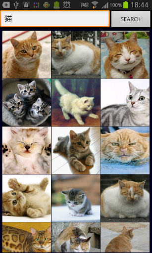 Animals Wallpapers | Birds Wallpapers | HD Desktop Backgrounds ...