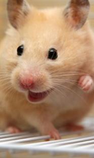 Happy Hamster Pet