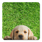 Puppy Puzzle for Kids FREE
