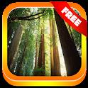 天籁放松:森林。 icon