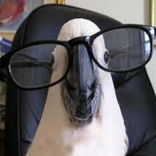 Разговорник для попугаев