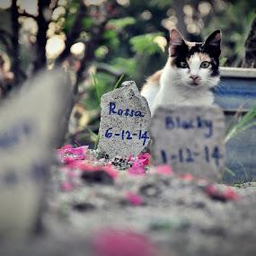 R.I.P by Nydzam Ahmad - Animals - Cats Kittens