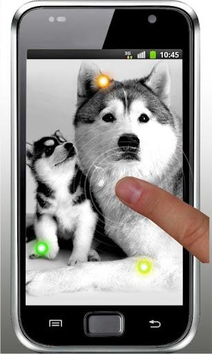 玩免費個人化APP|下載Lovely Puppies live wallpaper app不用錢|硬是要APP