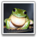 Cute Frog Wallpapers icon