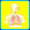 Human Body Anatomy for Kids 2 APK