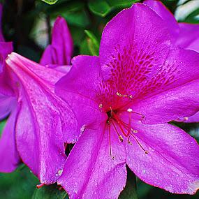 Munge by Azman Kamaruddin - Flowers Flowers in the Wild