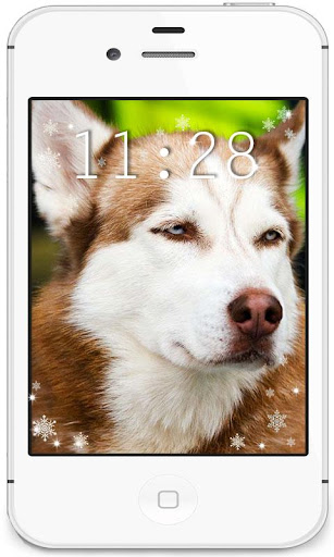 Husky Gallery live wallpaper