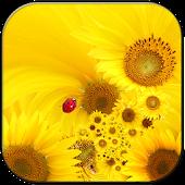 Sunflower lwp