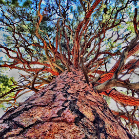 Big Tree by Blaine Cox - Instagram & Mobile iPhone