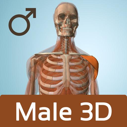 Male Anatomy 3D - Anatronica LOGO-APP點子
