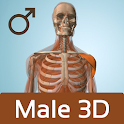 Male Anatomy 3D - Anatronica