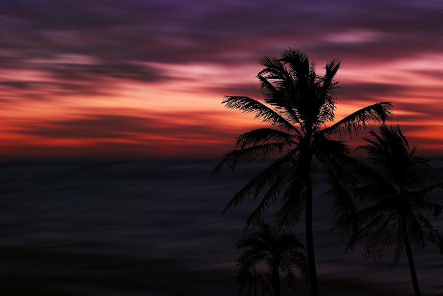 Fast  by Jose German - Landscapes Sunsets & Sunrises ( palm, sunset, sea, ocean, sun,  )