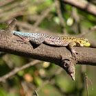Thin Tree Lizard