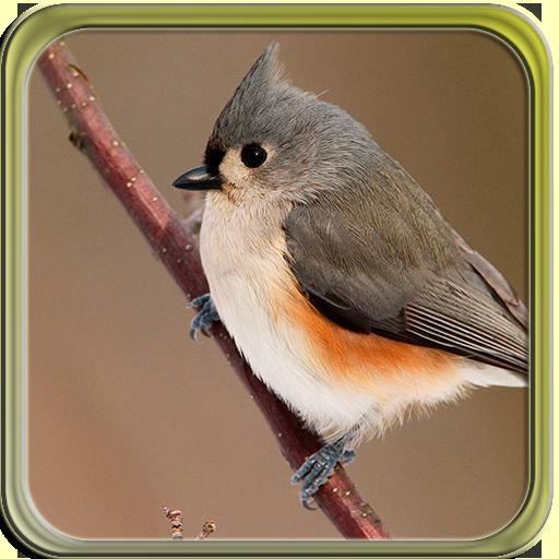 PUZZI困惑明亮小鳥高清 解謎 App LOGO-硬是要APP