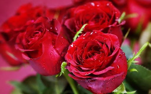 3D Rose  screenshots 3