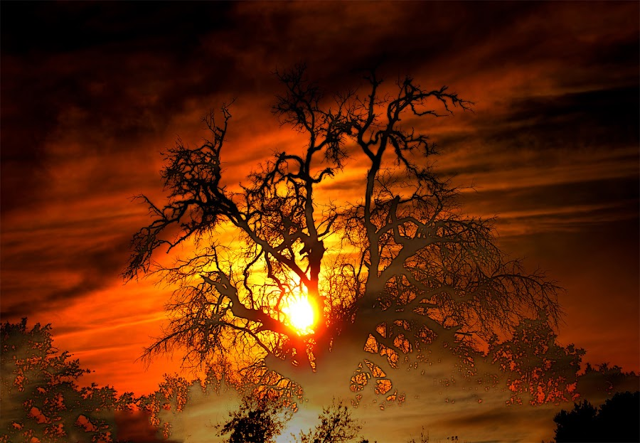 Sunset Visions by Scott Walker - Landscapes Sunsets & Sunrises ( clouds, dreams, sunsets, trees, visions )