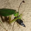 Leaf Preying mantis