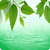 Rain Water Drop Live Wallpaper
