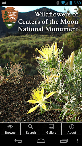 Flowers of Craters of the Moon