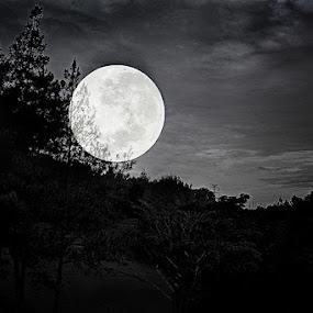 by Monique Sjarief - Black & White Landscapes