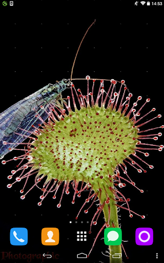 Sundew Live Wallpaper