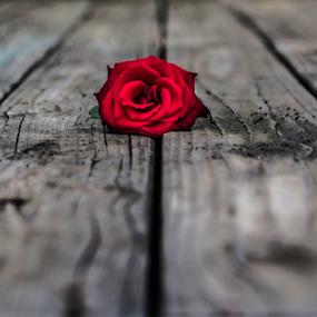 by Andrew Savasuk - Flowers Single Flower