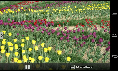 Beautiful Flowers Wallpapers screenshot 14