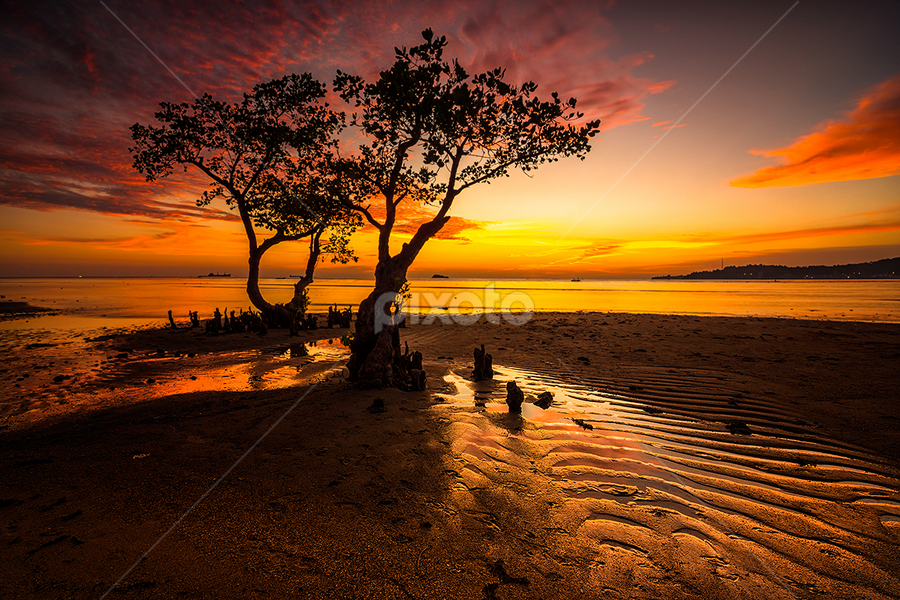 The Couple by Ade Noverzan - Landscapes Beaches ( sunset, twilight, beach, dusk, mangrove )