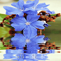Blue Flower Reflection LWP icon