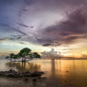 Tree of Kegalauan by Yossy Ryananta - Landscapes Beaches ( clouds, tree, colorful, sunset, beach, light, slow speed, slow shutter )