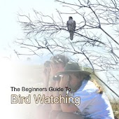 Beginners Guide To Bird Watch