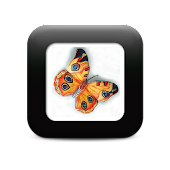 Colorful Butterfly Tattoos